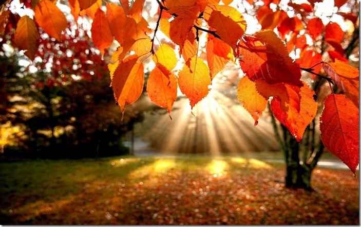 autumnfallphotography