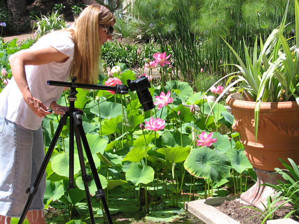 Photographing garden with tripod